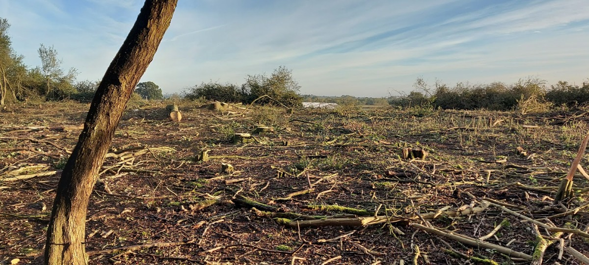 A field of dead and cut down trees at Calvert Jubilee Nature Reserve, where a woodland once was.